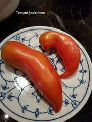 Tomaten- Paprika-Saatgut