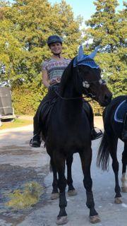 Reitbeteiligung gesucht Reiterin sucht Pferde