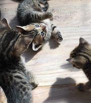 Katzenbaby s