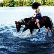 Wunderschöner braver Paint Horse Wallach