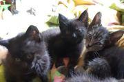 3 süße Katzenbabys suchen ein