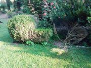 Hecke roden fräsen schneiden