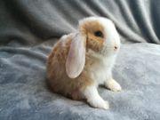 Verschiedene Tolle Kaninchen babys zu