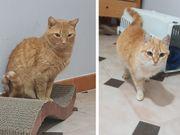 Katzen Princesita und Queen suchen