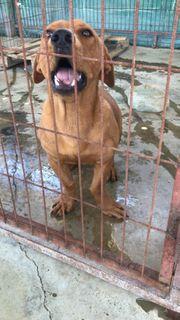 Liebevolle Pflegestellen für liebe Hundis
