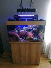 zu verkaufen kompletten meerwasser aquarium