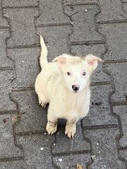 Bezauberndes Hundemädel BISCOTTI