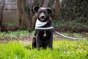 Tierschutzhund Romeo sucht ein Zuhause