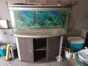 Aquarium 240l komplett mit Unterschrank