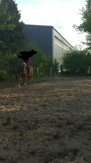 Reitbeteiligung Pferd sucht Reiter gerne