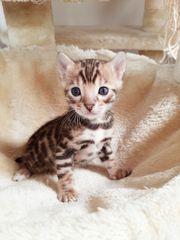 Kitten ab sofort Abgabebereit