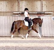 Vielseitiges Pony sucht ein neues