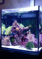 Red Sea Nano Reefer Aquarium