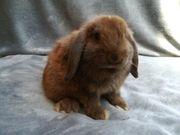 Tolle und liebe Kaninchen Babys