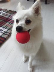 Private und liebevolle Hundebetreuung Einzelbetreuung