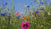 Gemeinsame Gartennutzung in Ettlingen