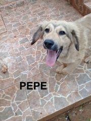 Pepe sucht ein zu Hause
