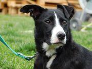HENNY - Listenhund - Idealer Zweithund aktiv