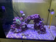 Aquarium - Waterbox - Peninsula mini 25