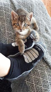 4 kleine Baby Katzen Kater