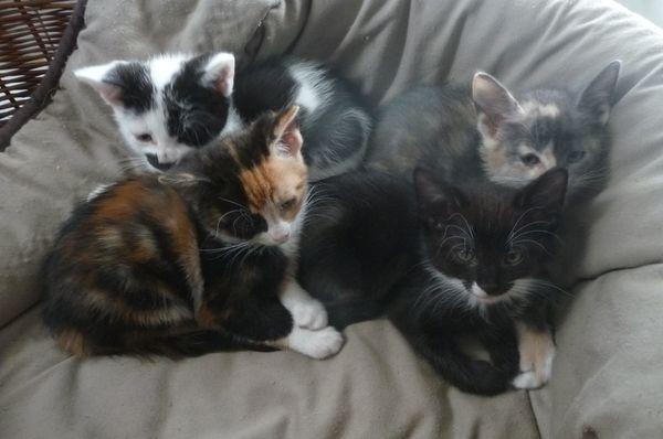 Süße verspielte Katzenkinder suchen Liebevolles