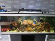 Komplettes Meerwasseraquarium inkl Besatz Meerwasser