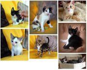 Katzenkinder suchen ein Zuhause