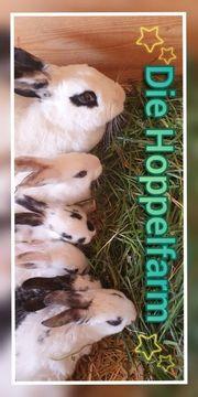 Kaninchengruppe Die Hoppelfarm