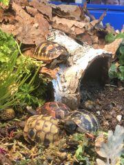 Land Schildkröten