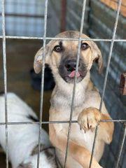 Hundekind Alfons konnte gerettet werden