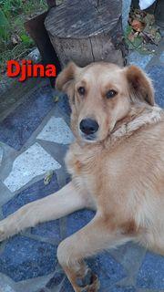 Die wundervolle Djina sucht ein