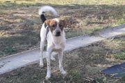 Nick Tierschutzhund
