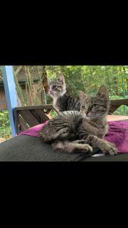 Hof Kitten