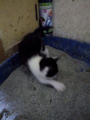 Katzenkinder 2019 1 Wurf