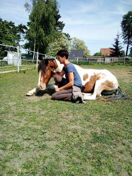Pferde - Filou - Lewitzer-Araber-Mix