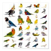 Nehme Vögel Sittiche auf Große