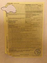 Griechische Landschildkröte testudo hermanni