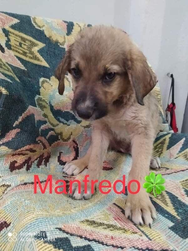 Welpenbub Manfredo sucht sein Zuhause