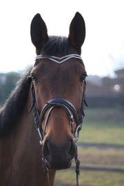 Vielseitigkeitspferd