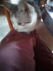 Katze Baby Kitte
