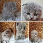 Fünf katzenbaby