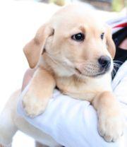 Familienhund Tiermarkt Tiere Kaufen Quoka De