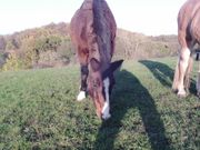 Reitbeteiligung und oder Pflegebeteiligung Pferd