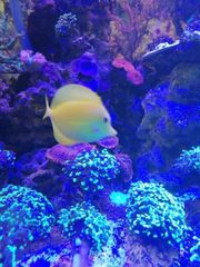 Aquarium gesucht