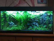 Aquarium Juwel 180 l 1m