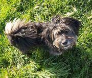 ERNIE - fröhlicher liebenswerter Cain-Terrier-Mix sucht