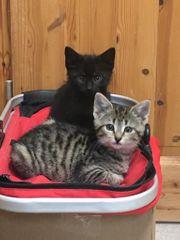 2 Katzenbabys abzugeben