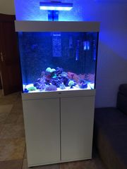 Meerwasseraquarium Lido 200 Meerwasser
