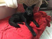 SOS - Notfall Lebensfroher Herzenshund Basti