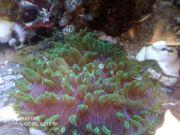 fungi Meerwasser